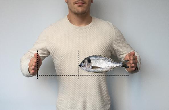 fisk-3